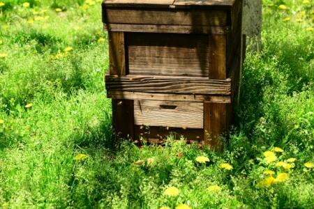 TOKIOも飼ったニホンミツバチを飼う時に必要な5つの管理