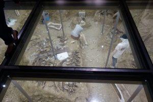 群馬県立自然史博物館 展示