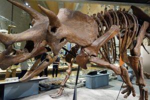群馬県立自然史博物館 恐竜の化石の展示