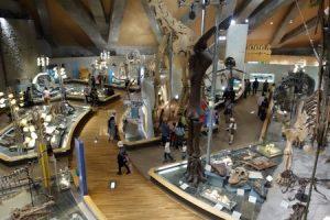 群馬県立自然史博物館 展示3