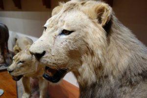 群馬県立自然史博物館 動物の剥製の展示