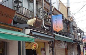 谷中銀座の猫